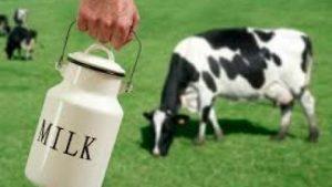 חלב לעגלים